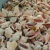 Big Corn Island - Back side if a conch processing facility