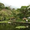 Nicaragua 2011: Selva Negra - The restaurant duck pond
