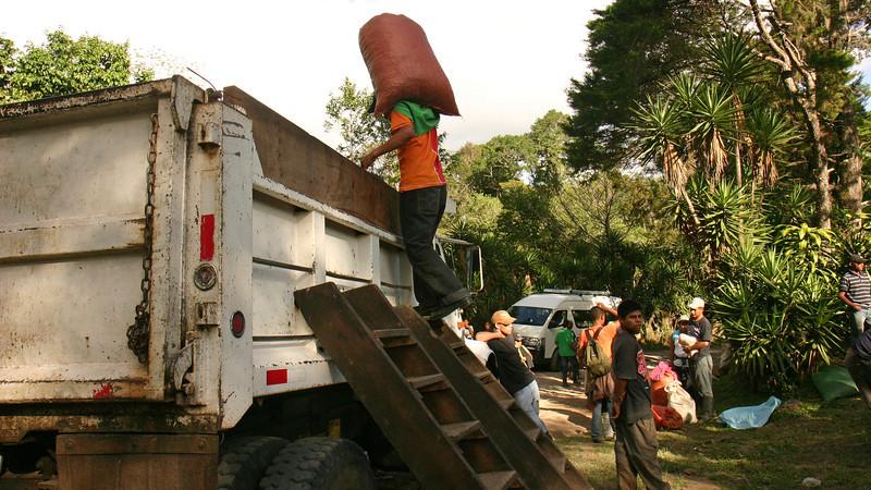 Nicaragua 2011: Selva Negra - Selva Negra is also a working organic coffee farm