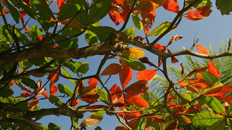Nicaragua 2011: Big Corn Island - Treescape