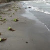 The beach was littered with debris, but all from beachfront vegetation--it was really windy down there.