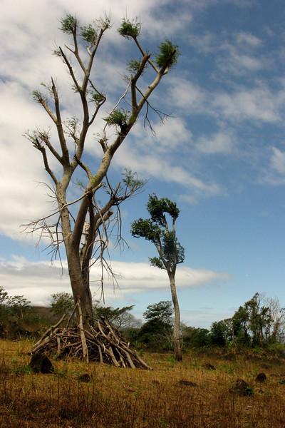 Desert-like vegetation
