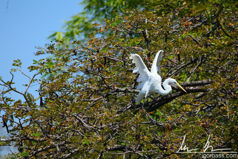 A heron perching on one of the islets, Isletas de Granada