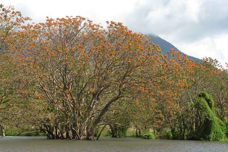 Bursts of orange, everywhere you looked. Some had howler monkeys in them, too.