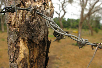 Barbed-wire fencing around cemetery