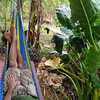 Hammock shot #1, taken in front of room #1.