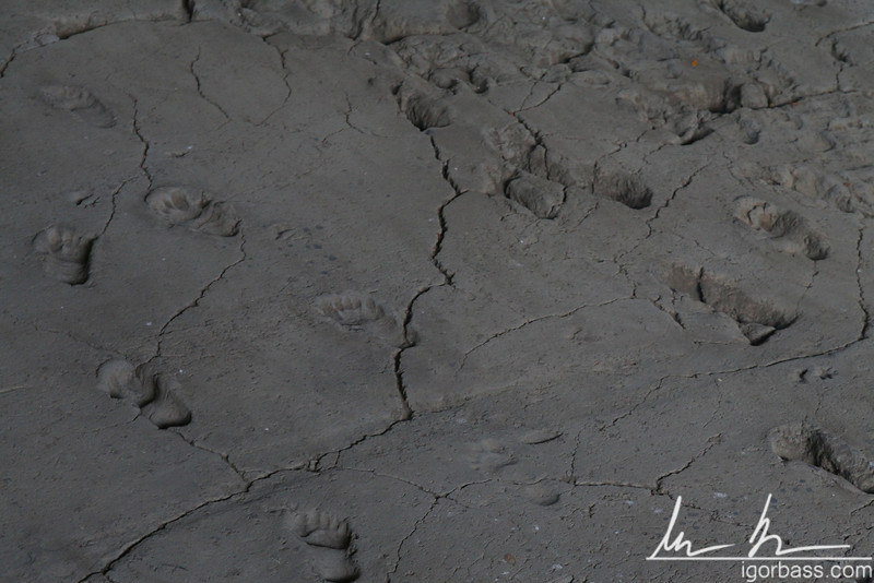 The Acahualinca footprints are fossil human tracks left behind in volcanic ash and mud, which solidified about 2,120 (some claim 6,000) years ago, shortly after a group of up to 15 people passed by on the southern shore of Lake Managua. They were discovered in 1874 by construction workers.
