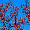 Springtime, El Lagartillo