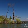 Trees on water, Isletas de Granada