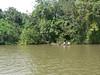 Local transport on the Rio san Juan, as seen during the boat trip to Boca de Sabalos village.
