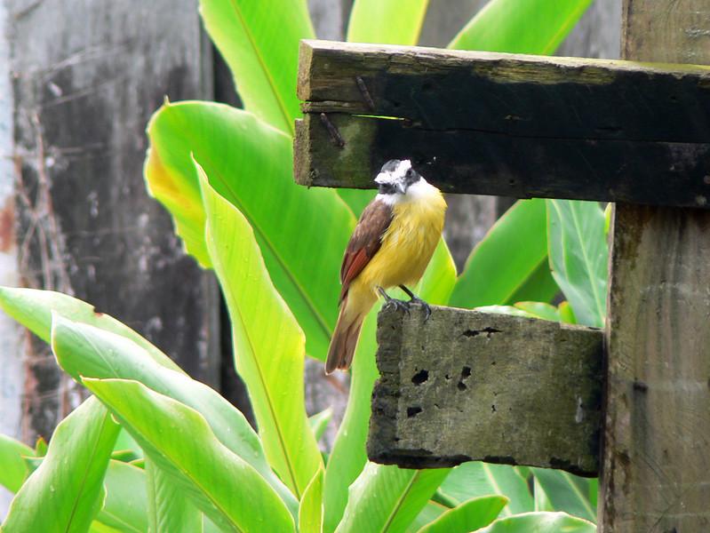 Lovely little bird at the dock.