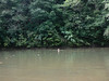 I am swimming in the jungle river.  Hopefully no caimans here!