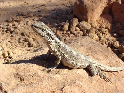 Gary the Gecko
