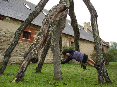 Climbing an upside down tree. Art in the castle grounds...