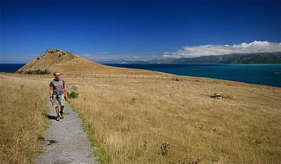 South Bay, Kaikoura Peninsula, Clifftop Walk. Zuidereiland, Nieuw-Zeeland.