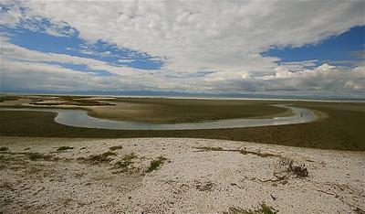 Miranda Shorebird, Firth of Thames. Noordereiland, Nieuw-Zeeland.