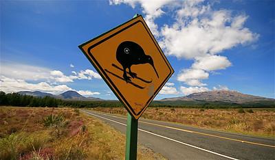 Kiwi's crossing @ Mt Ngauruhoe (Mt Doom) en Mount Ruapehu, Tongariro National Park. Noordereiland, Nieuw-Zeeland.