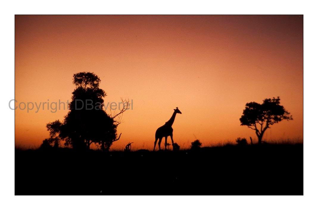 Kenya, Massaï Mara à l'aube © Didier Baverel