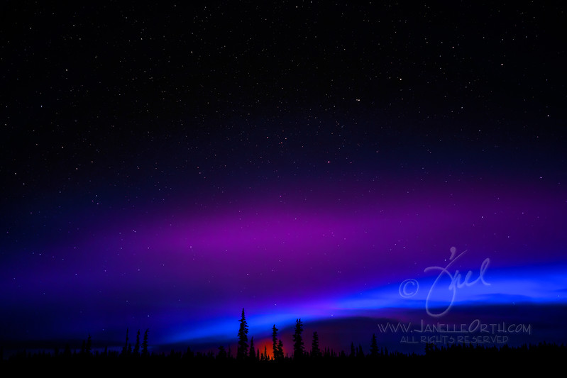 Aurora Purple and Blue  ©2017  Janelle Orth