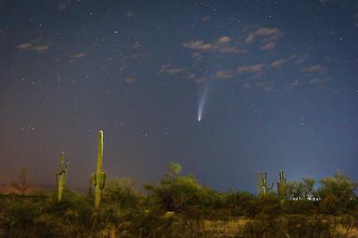 Comet Neowise and Cactus Phoenix