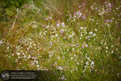 Niles Canyon Railway Sunol Wildflowers