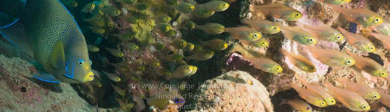 Ningaloo Reef Lighthouse Bay