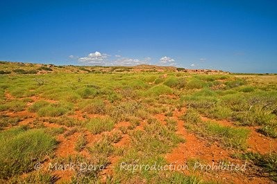 Spinifex, North West Cape, WA