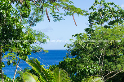 Green of coastal bush and trees with deep blue ocean and sky beyond.