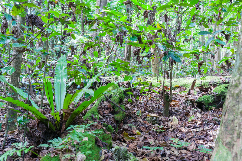 Beautiful natural bush and trees growing out of ancient coral on island Niue