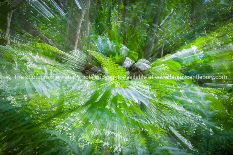 Abstract blurs of stunning bush walk to wonderful Matapa Chasm a popular travel destination on island of Niue in South Pacific