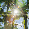 Coconut palm trees in tropical Niue sun flare through fronds