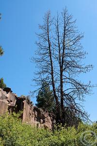 2010 Oregon-6744