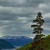 Noorwegen 2005 :  Kinsarvik - Fosse