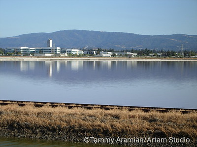 office park beyond salt evaporation pond, with East Bay hills in the distance