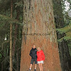 2017-09-17_1544_Tony_Elly_Cathedral Grove_Vancouver Island.JPG