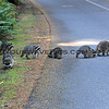 2017-09-24_1882_Raccoons_Point Defiance Park_Tacoma_WA.JPG