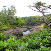 2017-09-22_1841_Wild Pacific Trail_Ucluelet_Vancouver Island.JPG