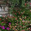 Monet's Gardens...  Flowers near a wall.