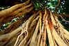 Waikiki trees, May 2006