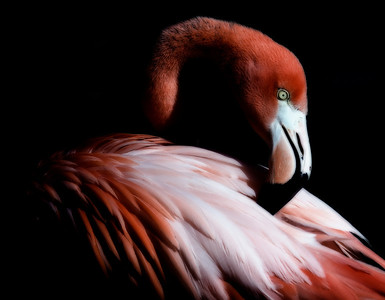 Flamingo - Honorable Mention, 2011 Sante Fe Photography's Contest on LIGHT.