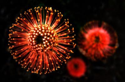 Horticultural Fireworks, San Diego