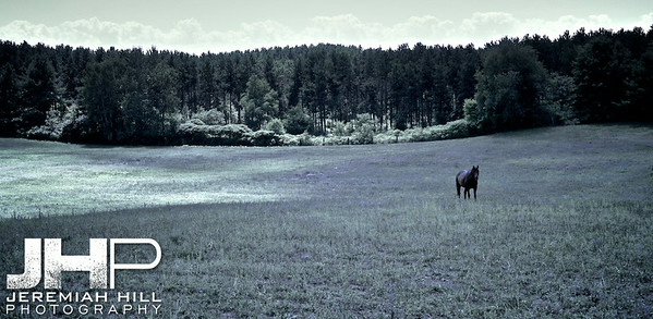 """""""Horse In Feild Covered by Cloud"""", Hillsdale, ON, Canada, 2011 Print JP11-814-010"""