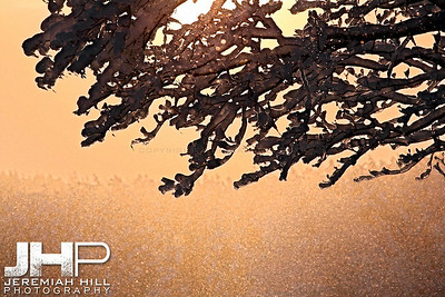 """""""Iced Tree In The Twilight"""", Hillsdale, ON, Canada, 2011 Print JP11-1231-013"""