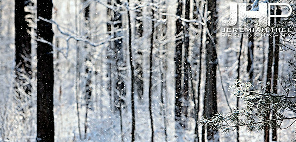 """Snow Focus"", Hillsdale, ON, Canada, 2011 Print JP11-1223-002"