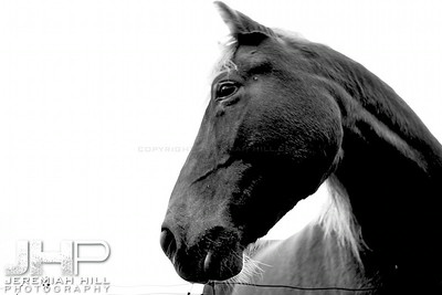 """""""Red in Black and White #1"""", Hillsdale, ON, Canada, 2011 Print JP12-104-082"""