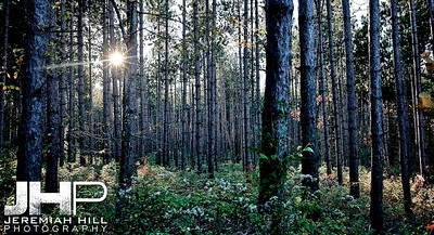 """""""My Own Woods"""", Hillsdale, ON, Canada, 2010 Print JP10-1013-239"""