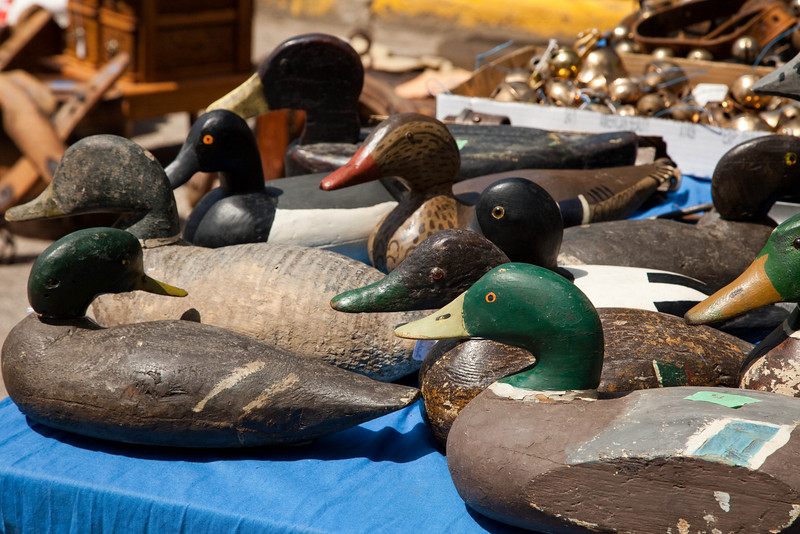 All kinds of ducks.