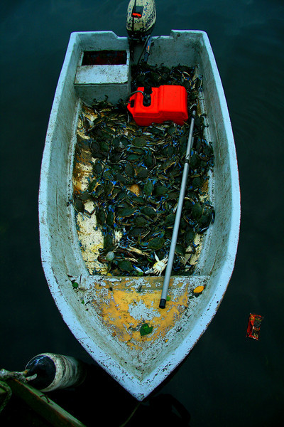 Boat of Blue Crab - Puerto Rico