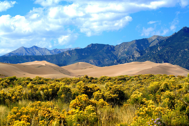 Flowers, Dunes and Mountains - Colorado