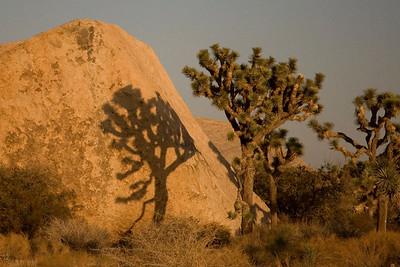 2006-11-24/25 Joshua Tree National Park